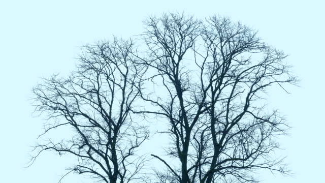 Bare Trees Sway In Strong Storm Winds