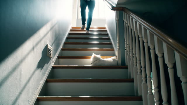 Barefoot Woman Going Down a Staircase Rear view of a back lit, barefoot late forties female in jeans going down a traditional set of stairs while her white cat watches and then runs into frame as cat hairs fly around. staircases stock videos & royalty-free footage