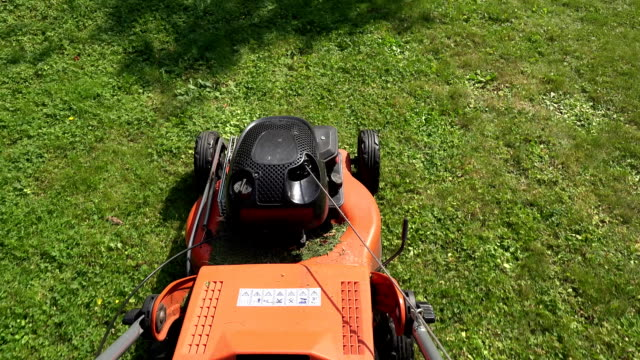 Barefoot worker man guy cut trim meadow grass with lawn mower. FullHD video