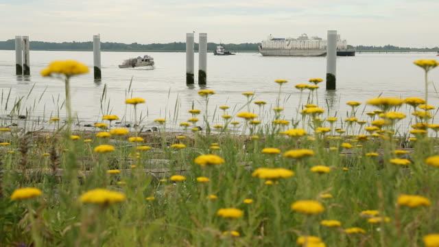 chiatta e fiori, fiume fraser - fiume fraser video stock e b–roll