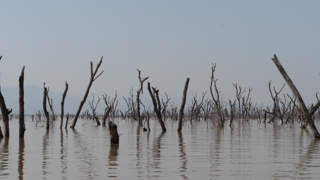 paesaggio del lago baringo che mostra l'ascesa delle acque con alberi morti, kenya, slow motion - full hd format video stock e b–roll