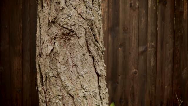 barken av en tall på en bakgrund av ett staket i trä - solar panel bildbanksvideor och videomaterial från bakom kulisserna