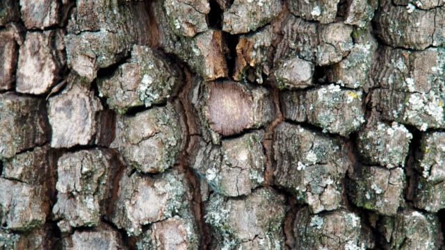 Bark of tree. Bark of tree. The texture of the tree. plant bark stock videos & royalty-free footage