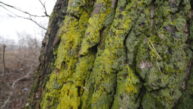 bark of wood with moss