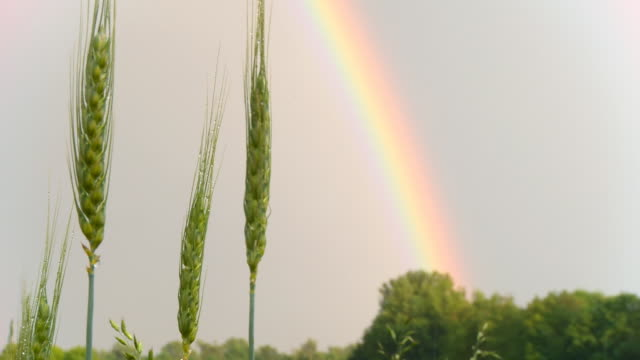 HD DOLLY: Barley Against Rainbow video