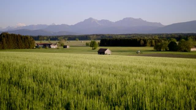 gerstenfeld in der bayerischen landschaft bei sonnenuntergang - roggen stock-videos und b-roll-filmmaterial