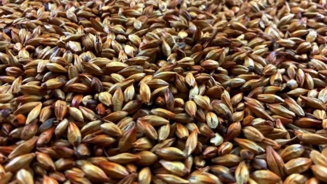 vídeos y material grabado en eventos de stock de textura de malta de cebada para la cerveza girando a cámara lenta. - grano planta