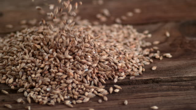 barley pouring , slow motion - orzo video stock e b–roll