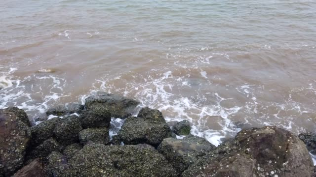 Barnacles, Rocks, Water
