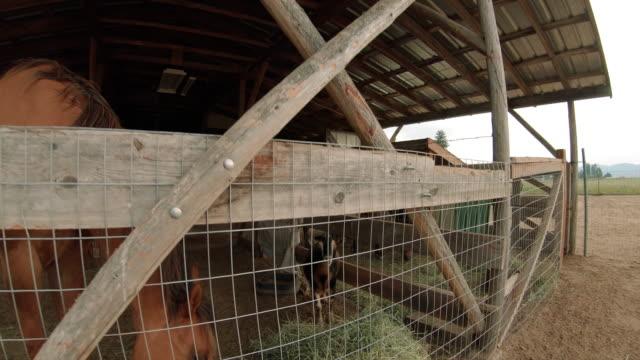 Barnyard Animals Horse Goats and Chickens Up Close