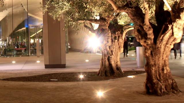 vídeos de stock, filmes e b-roll de carmo branco azeitona árvores no centro de los angeles à noite - largo descrição geral