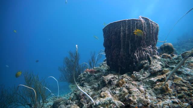Barrel sponge (Xestospongia testudinaria), whip coral (Junceella) and Sea fan coral (Gorgonian).  Distressed Coral Reef Bleaching on Damaged Fragile Ecosystem Ocean Environment.  Koh Haa, Krabi, Thailand. video
