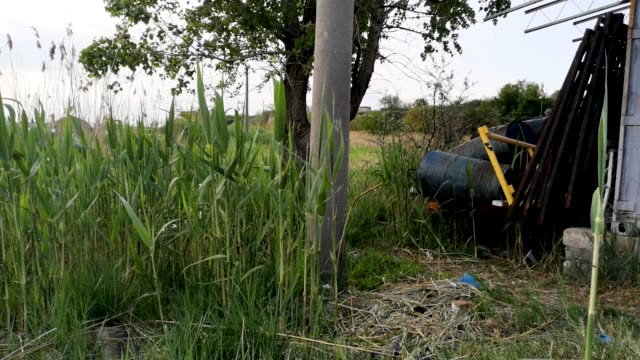 Barrels of industrial waste near the green tree and reeds. The concept of pollution of nature and storage of toxic products