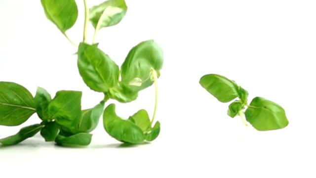 vídeos de stock e filmes b-roll de basil leaves falling in slow motion - manjericão