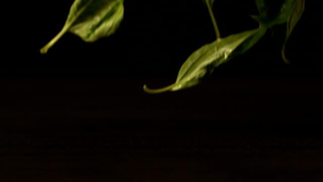 Basil leaves falling onto black surface video
