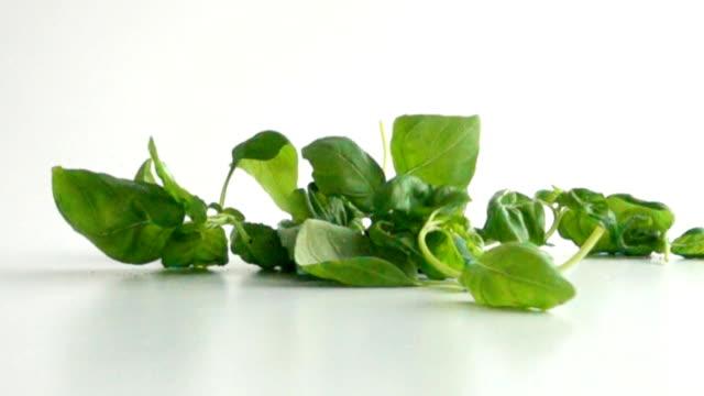 basilika blad faller på vit yta - basilika ört bildbanksvideor och videomaterial från bakom kulisserna