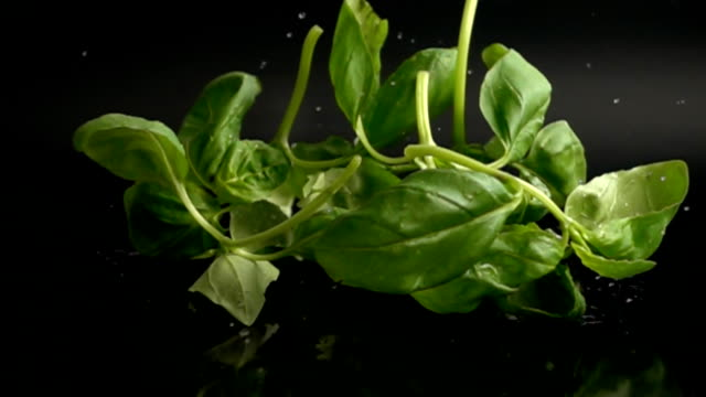 Basil leaves with water drops falling in slow motion video