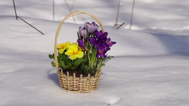 A basket of flowers standing on a wooden table in a snowy forest. A basket of flowers standing on a wooden table in a snowy forest. first occurrence stock videos & royalty-free footage