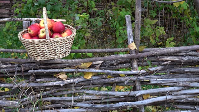 Basket with red apples stands in the garden