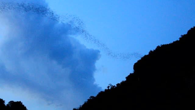 Bat Cave,Bats out of the cave in Thailand,Unseen thailand,Phuphaman,khonkaen,Thailand video
