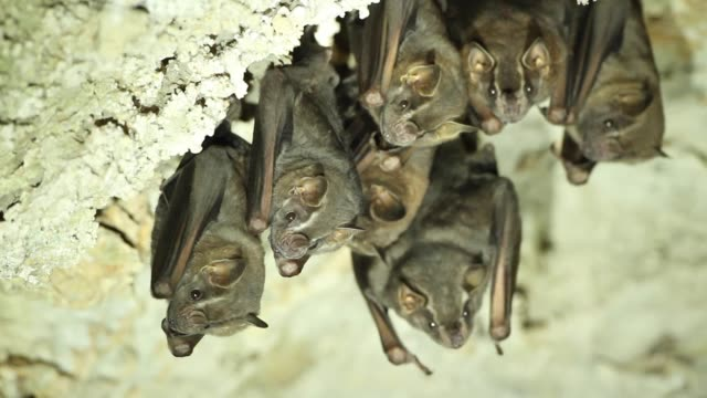 bat colony in cave Many bats in cave north america stock videos & royalty-free footage
