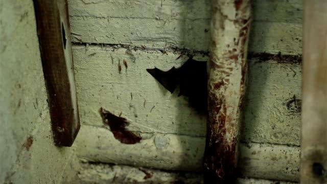 Bat Hanging Upside Down video