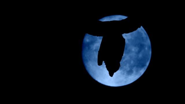 Bat In Front Of Full Moon Flies Off video