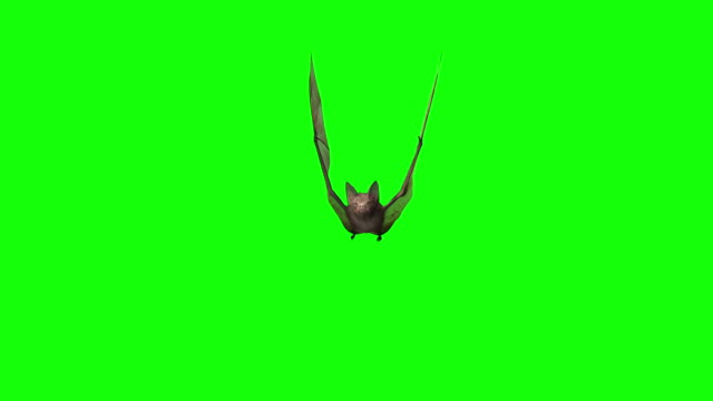 3D Bat Looped Alpha Footage Included 3D Bat Looped Alpha Footage Included vampire stock videos & royalty-free footage