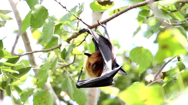 bat. - horseshoe stock videos & royalty-free footage