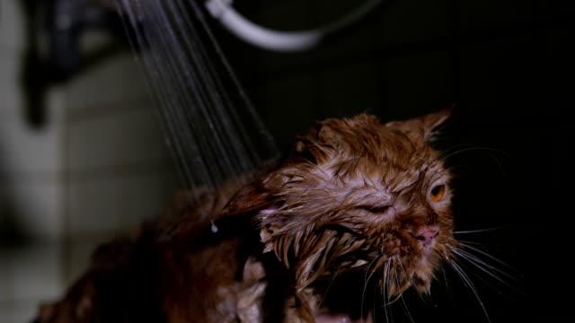 Chat de bain - Vidéo
