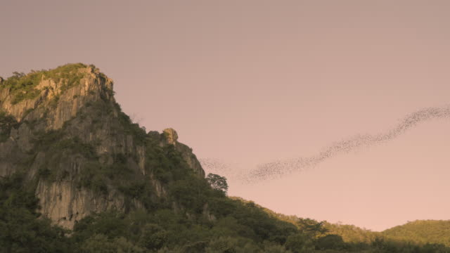 Bats flying from a cave at sunset video