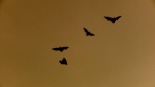 Bats Flying in Dusk Sky video