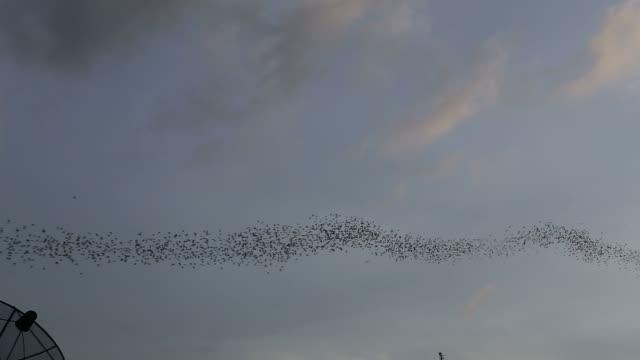 Bats flying video