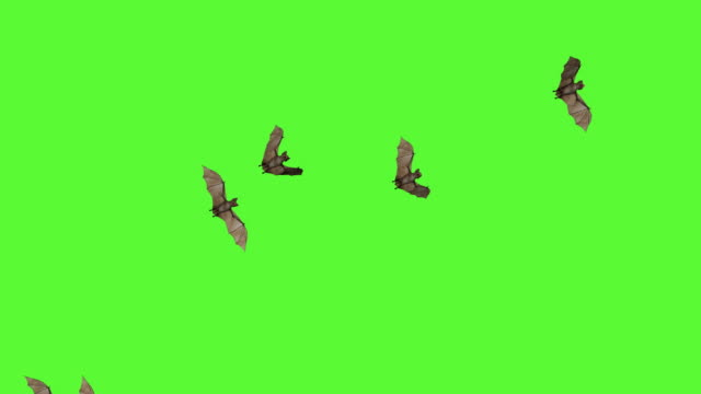 3d bats green screen - halloween background filmów i materiałów b-roll