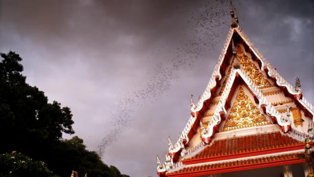 Bats in Thailand nr 3 video