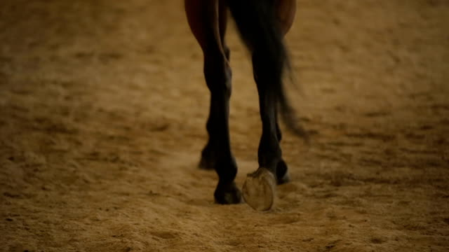 bay horse hooves walking on sand, hippotherapy treatment, horseback riding - cavallo purosangue video stock e b–roll