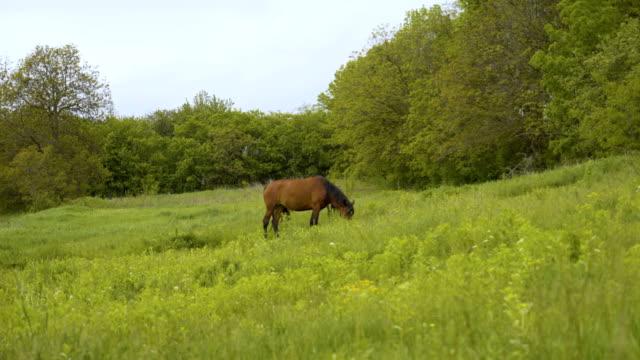 stockvideo's en b-roll-footage met bay horse run galop in groene weide 4k - blue sky