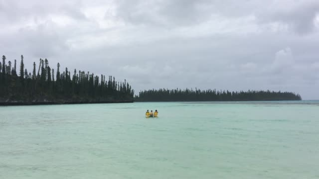 bay of oro in new caledonia - albero tropicale video stock e b–roll