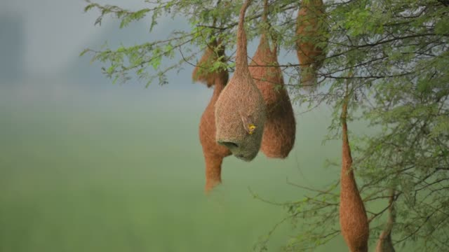bayaweber webnest - nest stock-videos und b-roll-filmmaterial