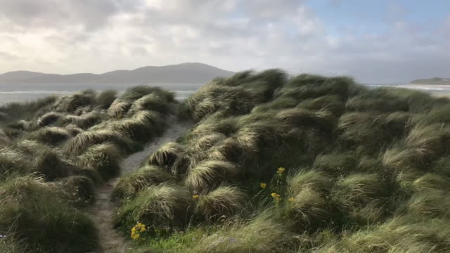 Beach at Luskentyre with dune grasses blowing in the foreground, Isle of Harris, Outer Hebrides, Scotland Beach at Luskentyre with dune grasses blowing in the foreground, Isle of Harris, Outer Hebrides, Scotland coastal feature stock videos & royalty-free footage