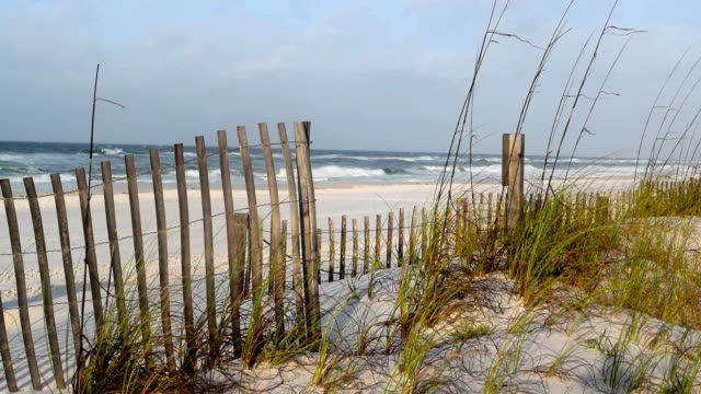 Beach dunes.