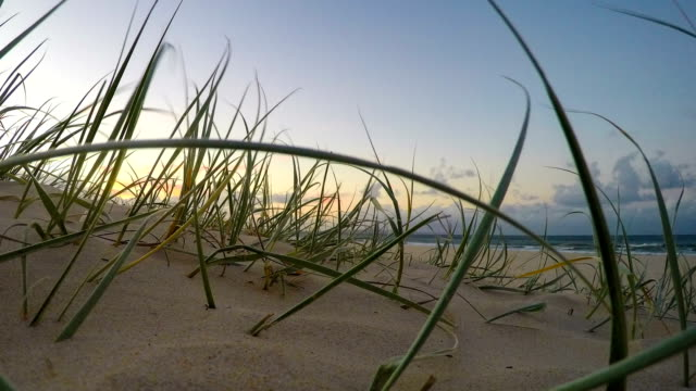 Beach grass blowing in the wind at sunset Close up of australian beach grass blowing in the wind at sunset. Ocean waves in the background with a small group of unrecognizable people walking through. Clouds pass over in the end. Filmed at Main Beach, Noosa Heads, Australia. coastal feature stock videos & royalty-free footage