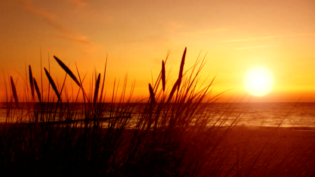 Strandgras, Sonnenuntergang Meer – Video