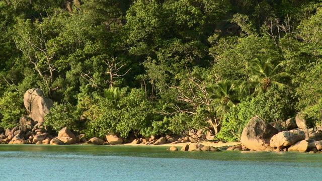 hd: spiaggia alle seychelles - cespuglio tropicale video stock e b–roll