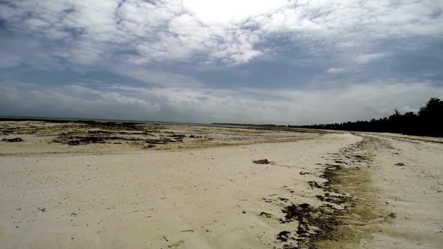 beach in zanzibar at low tide - ekvatorn latitud bildbanksvideor och videomaterial från bakom kulisserna
