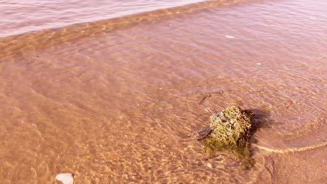 sahil kumu bir dalgalar ile. - start stok videoları ve detay görüntü çekimi