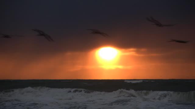 Beach Sunset and Birds video