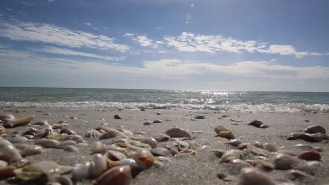 Beach Vacation Destination Sanibel Island Video beach waves near sea shells animal shell stock videos & royalty-free footage