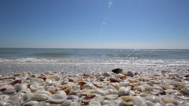 Beach Vacation Destination Sanibel Island Video cool seashell waves clear sky animal shell stock videos & royalty-free footage