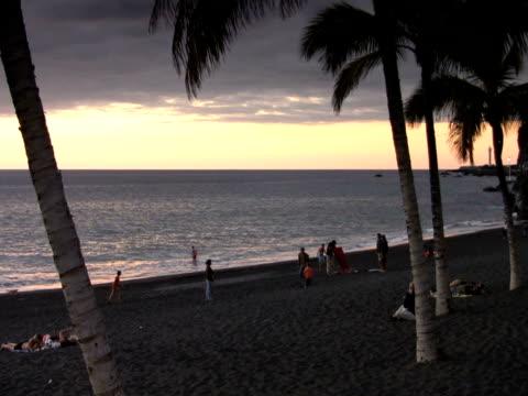 ntsc: beach - 枝 植物部分 個影片檔及 b 捲影像